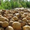 Картофель и огурцы в Украине дороже, чем в столице Великобритании