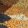 Отсутствие на Украине снега зимой привело к дефициту семян