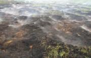 Возгорание торфяников в Киевской области