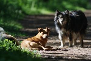 В Румынии легализуют эвтаназию бездомных животных