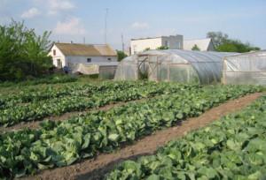 Канада поможет сельскому хозяйству